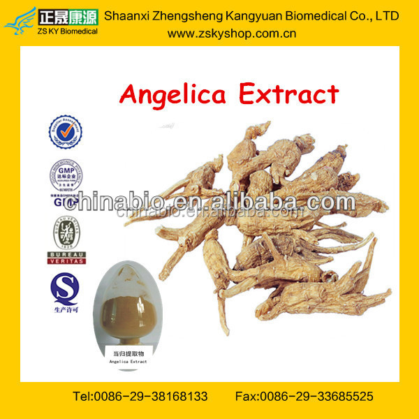 GMP Manufacture Supply Natural 100% Angelica Sinensis Extract