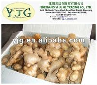 yjg 100% High Quality 150g Fresh Yellow Ginger