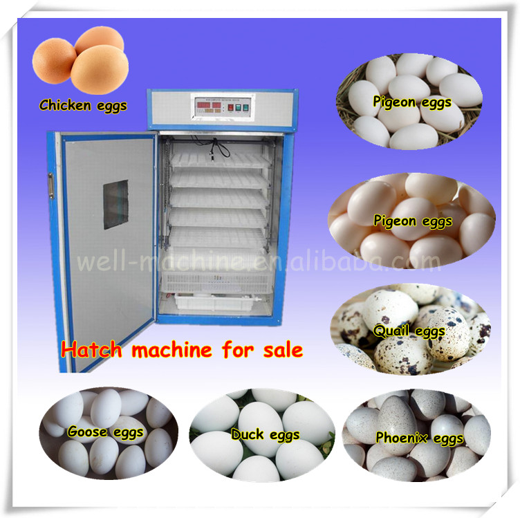 Chick Egg Hatch Machine