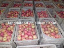 80% red clour fuji apples/yantai origin