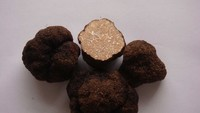 Dried Black truffle, wild truffle, truffle buyer