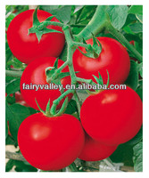 2014 Newest Crop High Yield Hybrid F1 High Disease Resistance Indeterminate Tomato Seeds From China For Planting-Europe Red Lion