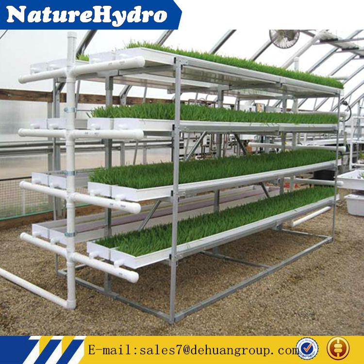 Промышленная гидропонная установка для выращивания витграсса 52