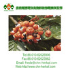 /product-detail/100-natural-guarana-extract-10-caffeine-in-stocks-herbal-extract-60360619723.html