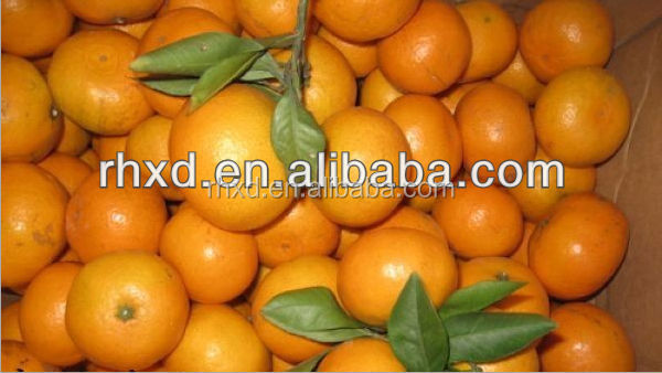 Chinese Jiangxi Nanfeng mi ju orange fruit