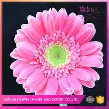 best gift and mix order is welcome gerbera pink flower for florist