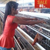 stainless steel wire chicken layer cages