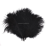 PM-584 15-20cm Wholesale High Quality black Natural ostrich feathers