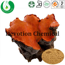 Antrodia Camphorata powder Herbal Extract Triterpenoid