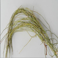 MA HUANG herbal medicine ephedra