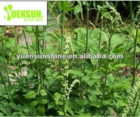 YuenSunshine Offer Black Cohosh Extract / saponin supplements