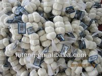 artificial natural fresh garlic