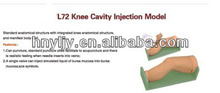 medical science teaching model clinical skill training model ---L72 Knee Cavity Injection Model