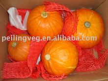 saffron fresh big pumpkin