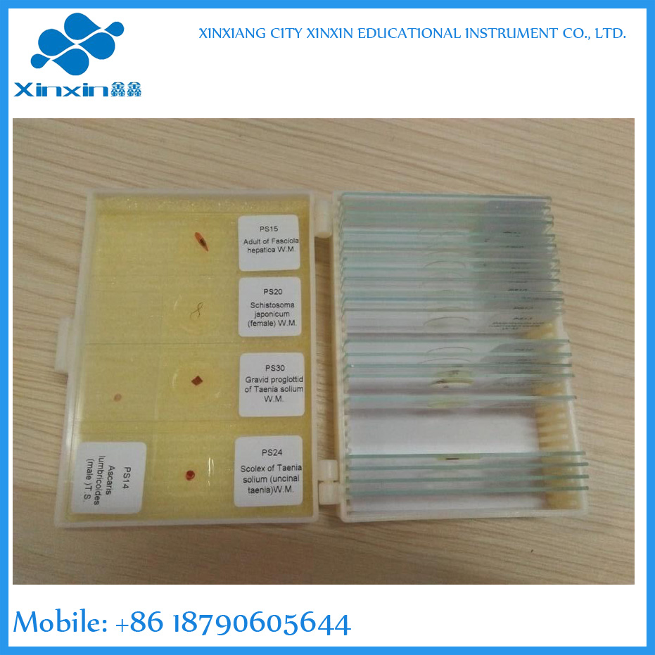 lab school teaching biology parasite microscope slides