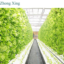 commercial hydroponic systems used in glass greenhouse