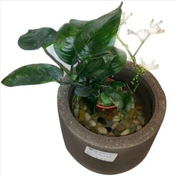 wholesale urban cement and concrete flower pot/planter for home and garden decoration