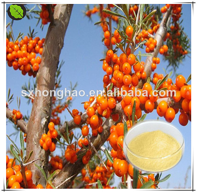 Free sample hippophae rhamnoides powder distributors wanted
