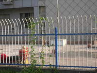 Very Firm!!!High Security Fence for garden(ISO9001 MANUFACTURER)