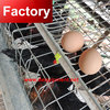 Wholesale Price baby chicken brooder with low price