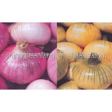 Chinese fresh onion
