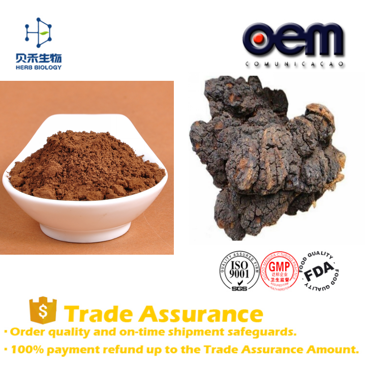 Supply Free Sample Chaga Mushroom Extract / Russia Chaga Powder