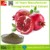 Natural Best Price Pomegranate Peel Extraction