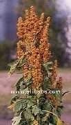 Quinoa Real, Cereal Organic, Grain,