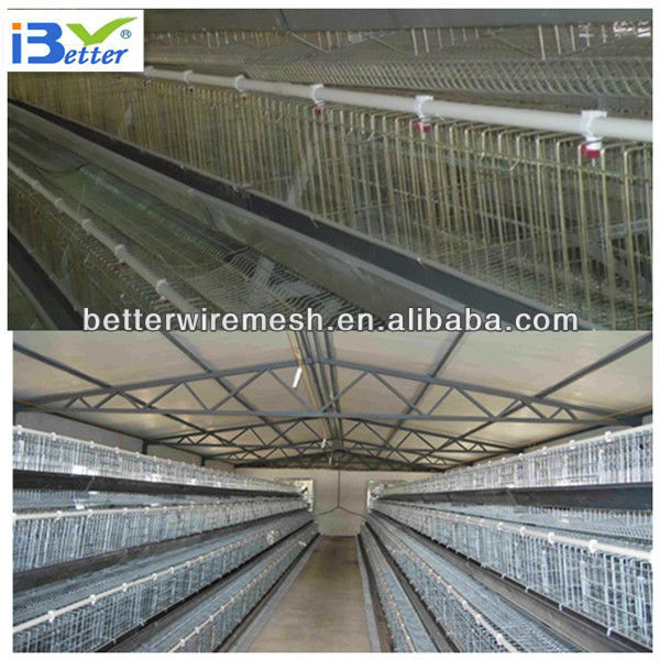 auto design layer chicken cages for Poultry Farm