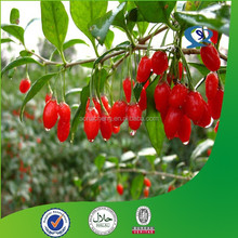 manufacturer india pharmaceutical raw materials goji wolfberry extract price