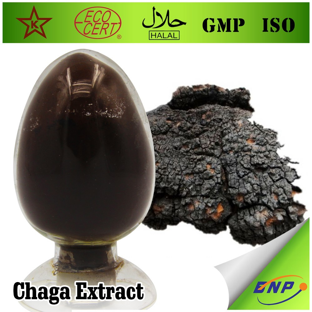 High Quality Chaga Mushroom Extract Powder