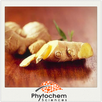 Chinese herbal product Ginger Extract 5.0% 10.0% 20% 40.0%Gingerols