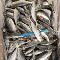 Samll size Land frozen Canned Food Raw Material For Market sale New landing big eye mackerel fish