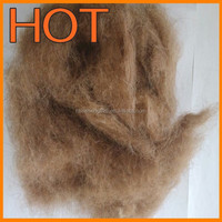 CARDED Camel waste hair, 34-36mic 45-50mm ,filling camel hair