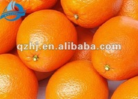 Fresh Chinese Valencia Orange