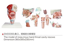 The model of nose,mouth and throat cavity resowe