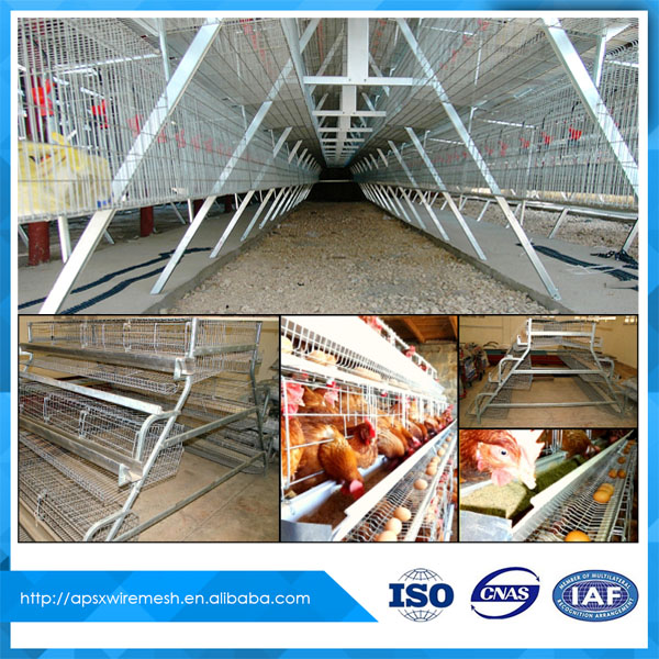 Low prices indoor and outdoor metal wire pyramid chicken cage for sale (whatsapp + 86 18333844891)