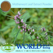 Hot Sell Chinese Motherwort Extract Powder For Women Sex Motherwort Leaf Extract Motherwort Extract