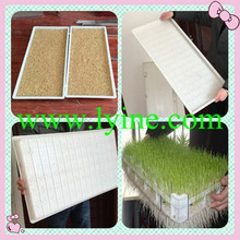 New Fashion Bean Seedling Tray / Sunflower Shoots Peanut Sprout Tray