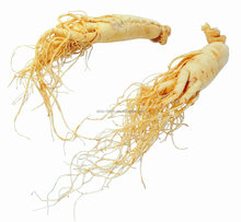 Free Sample Famous Chinese Herb Ginseng Root Panax Ginseng