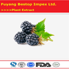 Sang shen Mulberry Fruit Extract Powder Mulberry Fresh Fruit