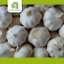 wholesale fresh natural white garlic from china