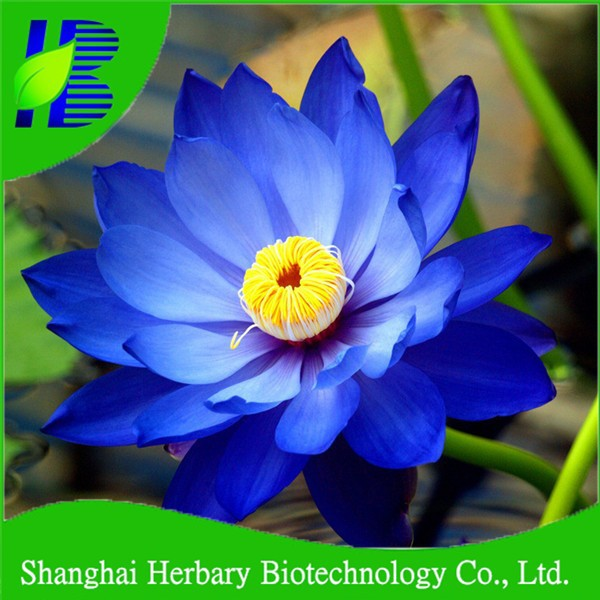 Price for Blue lotus seeds, water lily lotus seeds