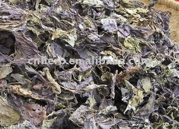dried natural Perilla Leaf