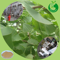 GMP Manufacturer Supply Ginkgo Biloba Herbal Extract