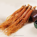 Korean red Panax ginseng
