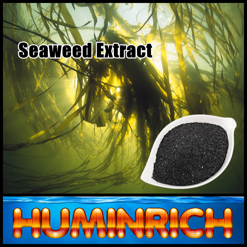 Huminrich Shenyang Sargassum Source Humate Organic Fertilizer Seaweed Powder