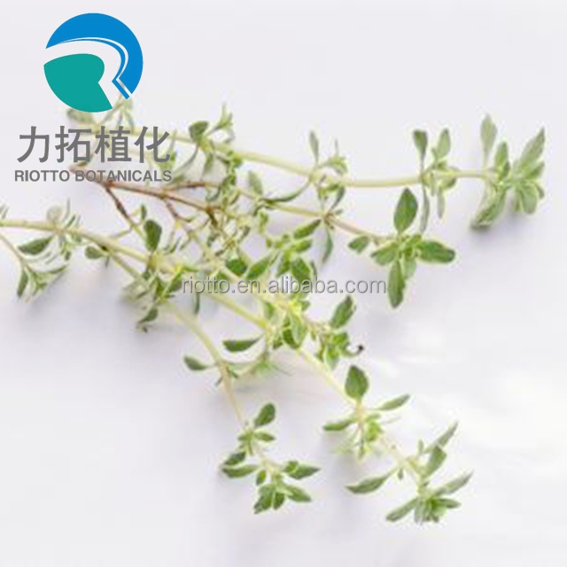 Manufacturer supply Nature thyme extract 4:1,10:1,20:1