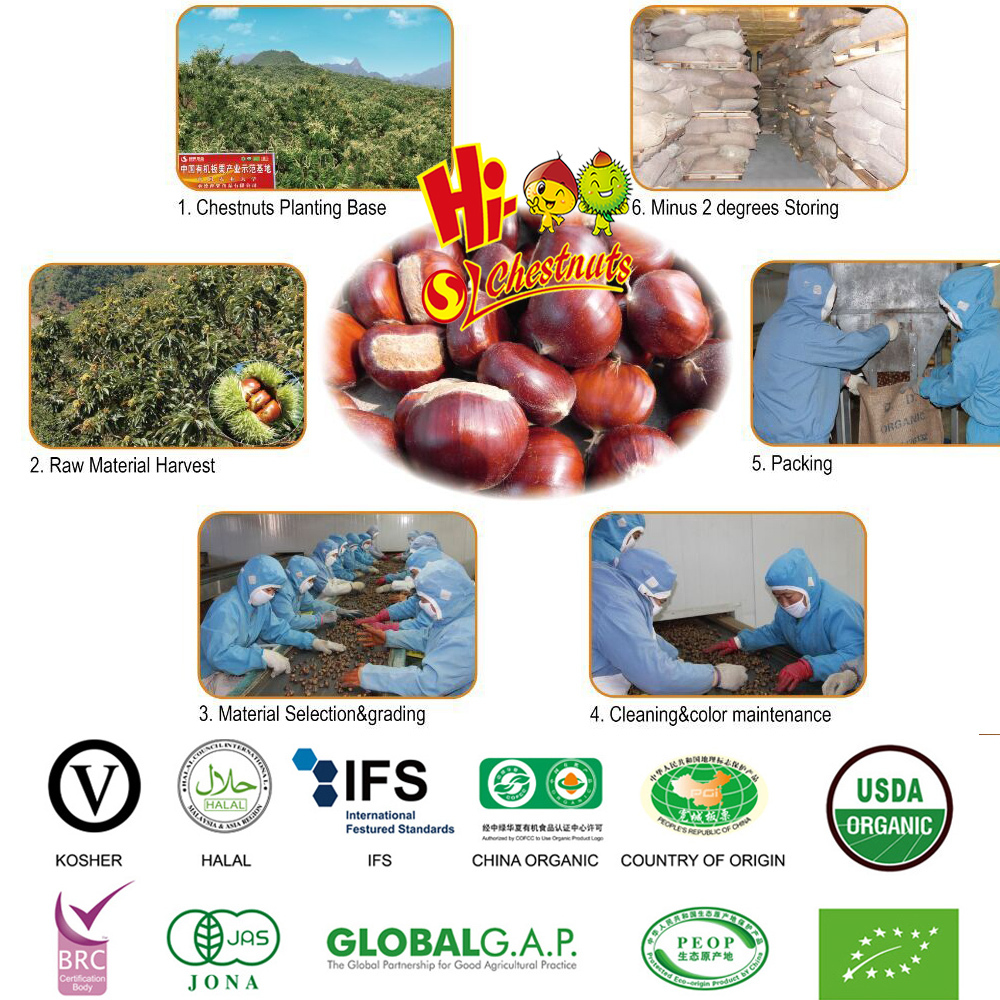 New Crop Chinese Chestnuts, raw fresh chestnuts, bulk chestnut for sale