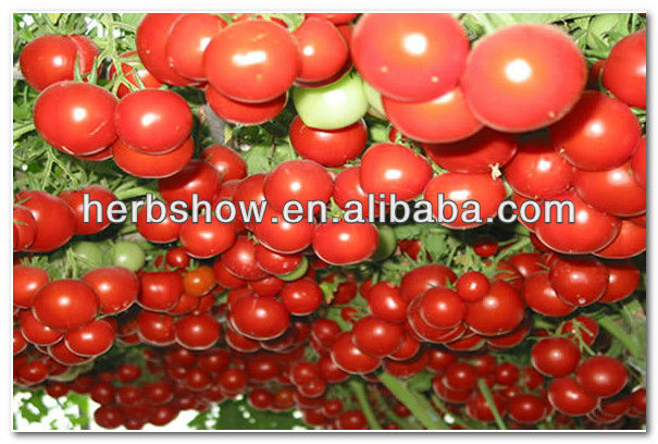 High Sweet Hybrid Tomato Tree Seeds Good Price